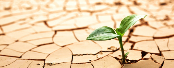 AgriSA_Website-image_Plant-growing-through-ground